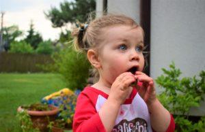 Truskawki w diecie dziecka. Foto Mama Zdrowie